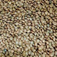 Spanish brown beans