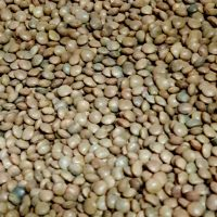Spanish brown beans