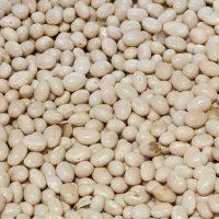 haricot beans